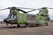 Canadian Armed Forces Boeing CH-147F Chinook (147304) at  RAF Fairford, United Kingdom